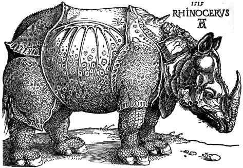 rino1-3